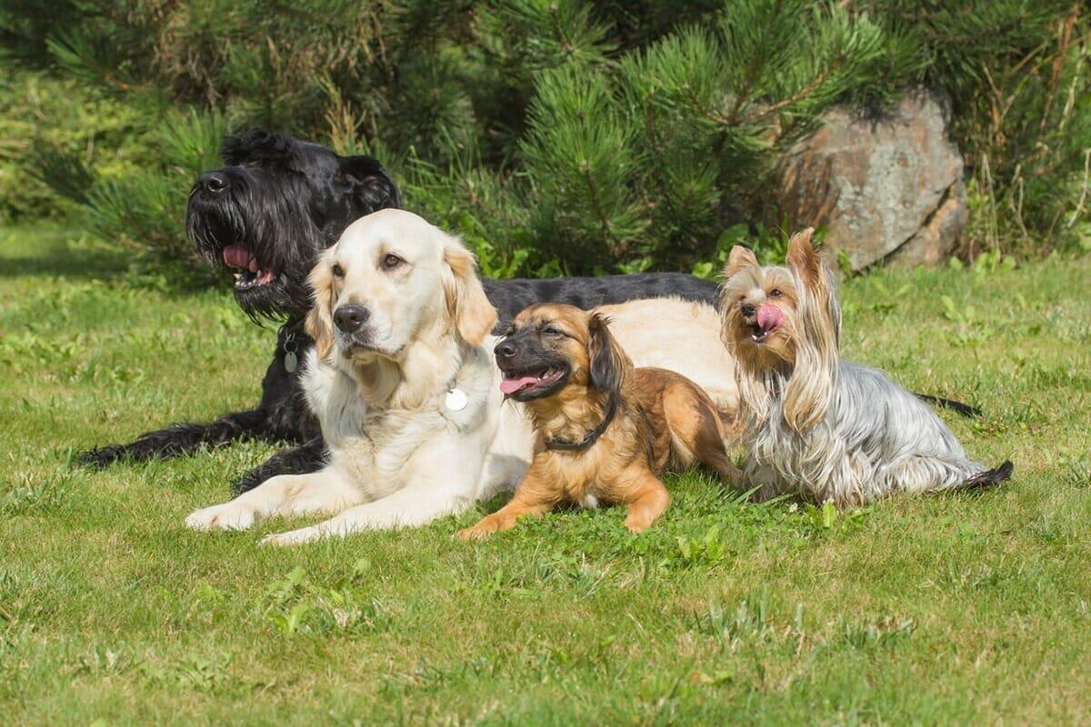 Veliki in srednje velike pasme